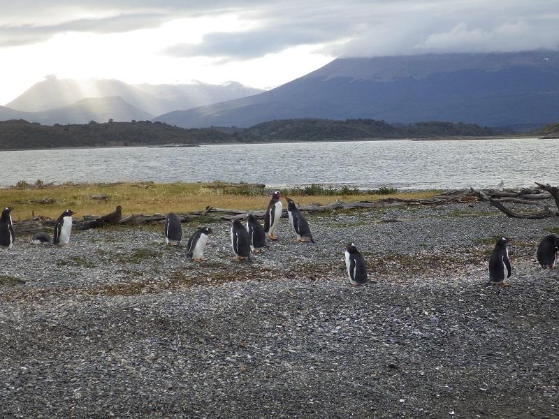 ウシュアイアのペンギン